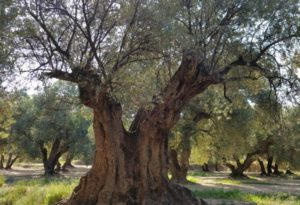 Rutas y senderos que descubren los alrededores de Belchite