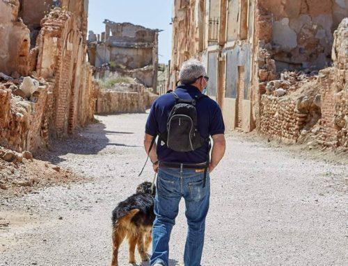 Belchite, destino amigable para las mascotas